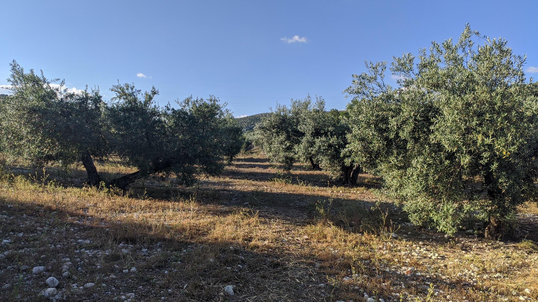 imagen 1 de Finca olivar Valderrubio