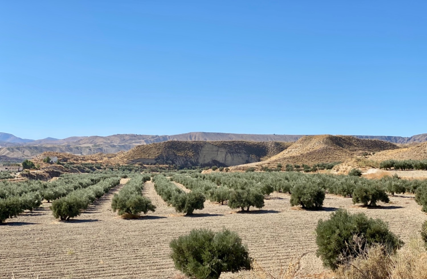 imagen 1 de Gran Oportunidad finca Olivos Granada