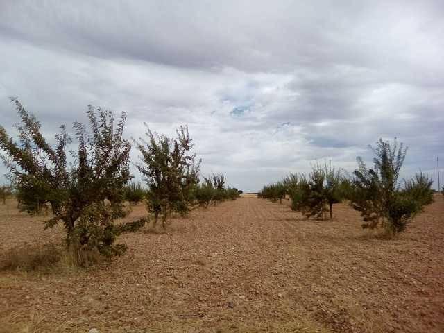 imagen 2 de Venta de finca en Villalgordo Del Jucar