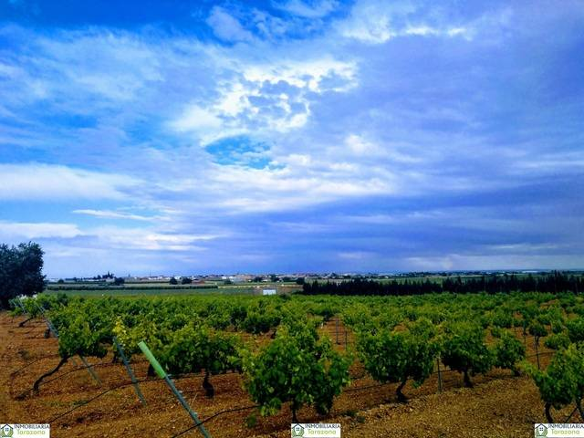 imagen 1 de Venta de viña en Madrigueras