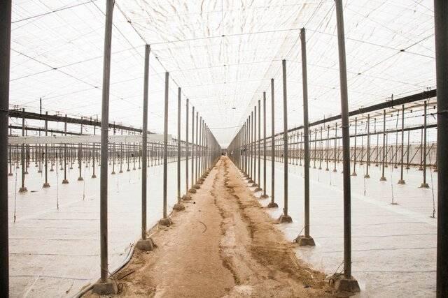 imagen 1 de Venta invernadero en San Isidro de Níjar