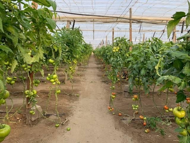 imagen 1 de Invernadero La cañada Almeria