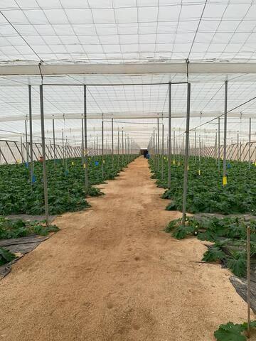 imagen 1 de Invernadero Carretera Níjar-San Jose Almeria
