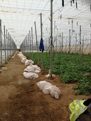 imagen 1 de Invernadero El Barranquete Almeria