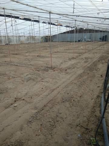 imagen 1 de Invernadero Llanos de la Cañada Almeria