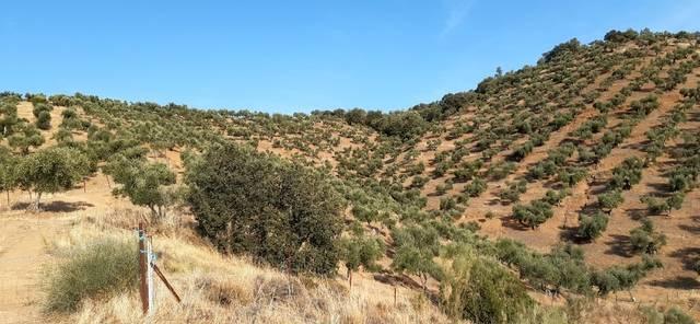 imagen 1 de Venta de olivar en Puebla Del Maestre
