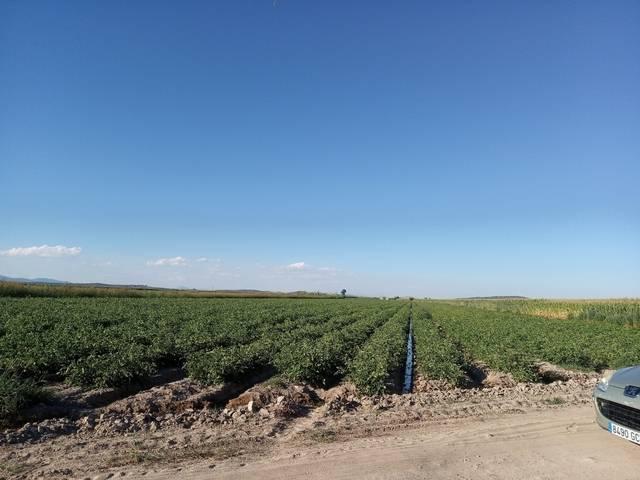 imagen 1 de Venta de terreno en Santa Amalia