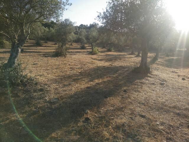 imagen 1 de Venta de parcela rústica en Alburquerque (Badajoz)