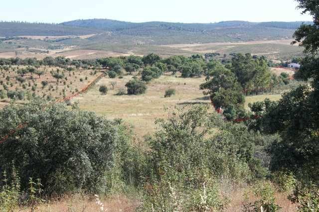imagen 1 de Venta de finca agrícola en La Codosera (Badajoz)