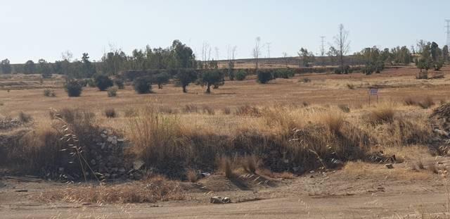 imagen 1 de Venta de tierra de labor en Almendralejo (Bandajoz)