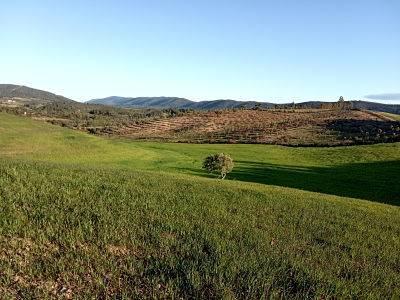 imagen 1 de Venta de fincas en La Codosera (Badajoz)