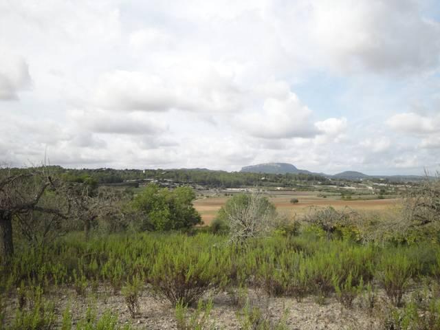 imagen 1 de Venta de finca entre Montuiri y Porreras (Mallorca)
