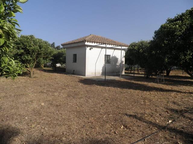 imagen 1 de Venta de parcela de naranjos en Chiclana de la Frontera (Cádiz)