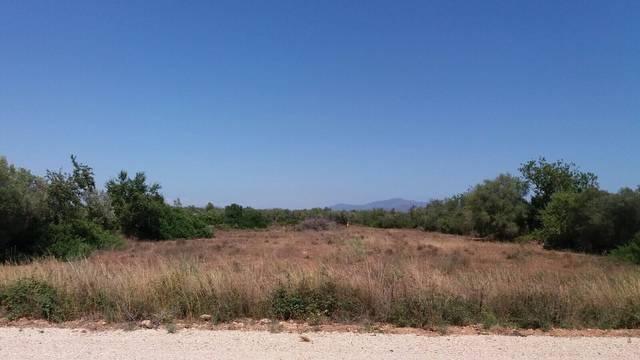 imagen 1 de Venta de finca en Vinaròs/Vinaroz (Castellón)