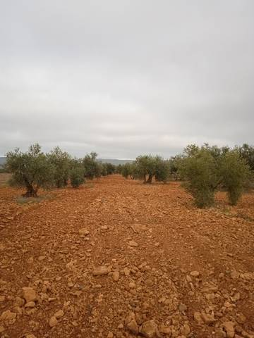 imagen 1 de Venta de finca olivar en Moral de Calatrava (Ciudad Real)