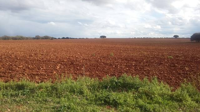 imagen 1 de Venta de gran terreno en Montiel (Ciudad Real)