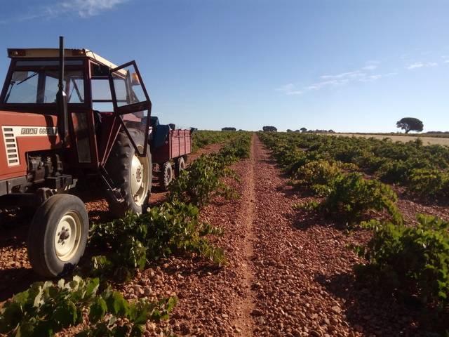 imagen 1 de Venta de finca con viñedo en El Provencio (Cuenca)