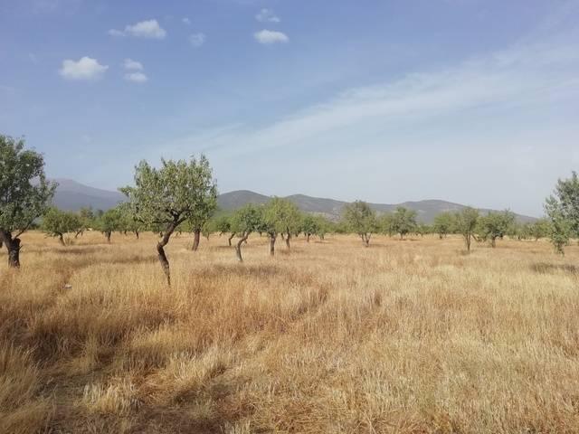 imagen 1 de Venta de finca en Jerez del Marquesado (Granada)