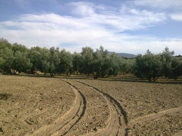 imagen 1 de Venta de finca olivar en Otura (Granada)