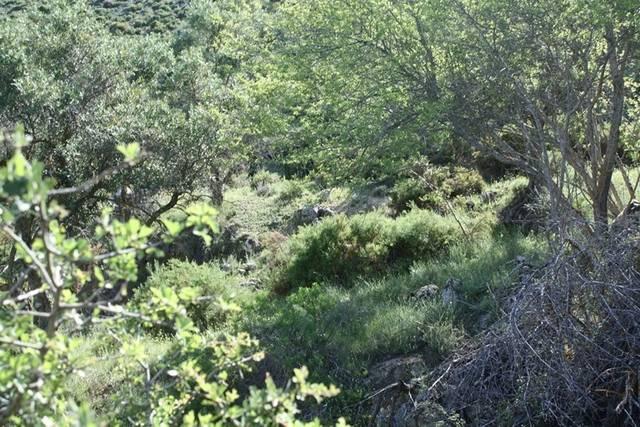 imagen 1 de Venta de finca en Cogollos de la Vega (Granada)