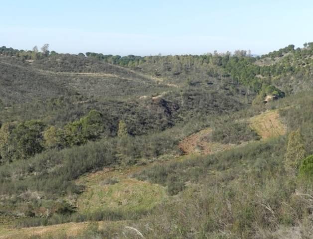 imagen 1 de Venta de magnífica finca en Valverde del Camino (Huelva)