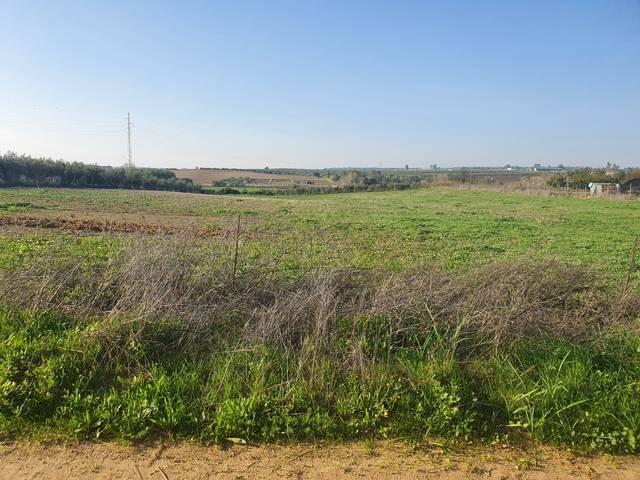 imagen 1 de Venta de finca en Almonte (Huelva)