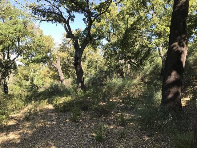 imagen 1 de Venta de preciosa finca en Aracena (Huelva)