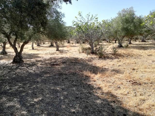 imagen 1 de Venta de finca olivar Cumbres de San Bartolomé (Huelva)