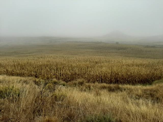 imagen 1 de Venta de finca de regadío en Ontiñena (Huesca)