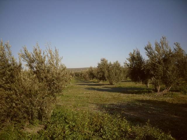 imagen 1 de Venta de finca en Higuera de Arjona (Jaén)