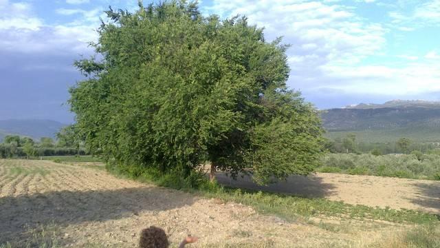 imagen 1 de Venta de terreno en Agrupación de Mogón (Jaén)