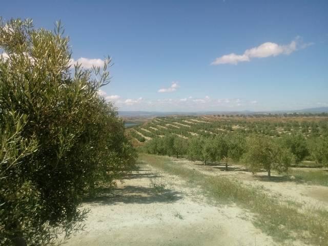 imagen 1 de Venta de finca en Huesa (Jaén)
