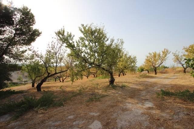 imagen 1 de Venta de magnífico viñedo en Torre del Campo (Jaén)