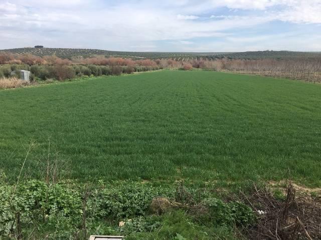 imagen 1 de Venta de terreno de regadío en Mengíbar (Jaén)