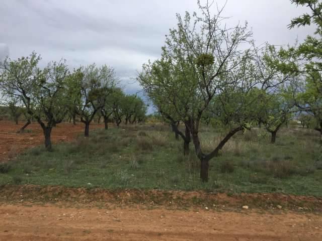 imagen 1 de Venta de magnífica finca de almendros en Arnedo (La Rioja)