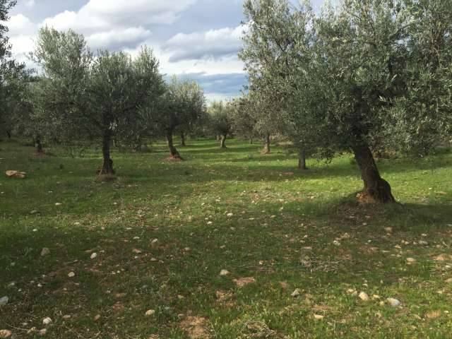 imagen 1 de Venta de finca olivar en Arnedo (La Rioja)
