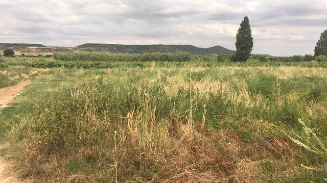 imagen 1 de Venta de finca en Navarrete (La Rioja)