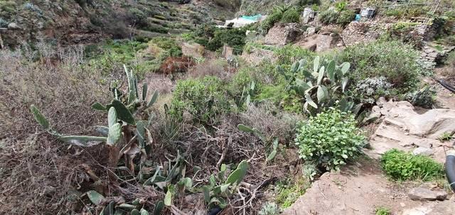 imagen 1 de Venta de parcela en Valle de Casares (Las Palmas)