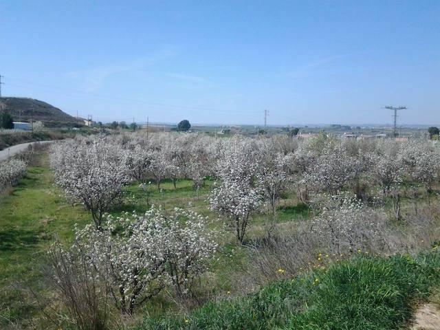 imagen 1 de Venta de finca de regadío en Lleida (Lérida)