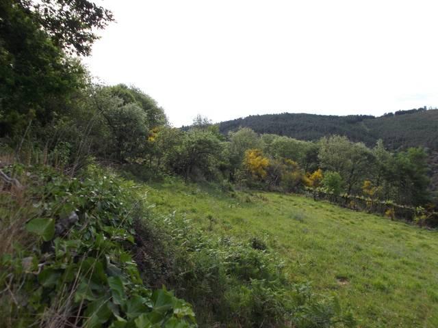 imagen 1 de Venta de finca para castaños en Quintá (Lugo)