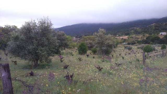 imagen 2 de Venta de bonita finca en San Martín de Valdeiglesias (Madrid)