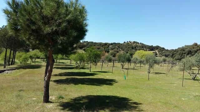 imagen 1 de Venta de preciosa finca en Colmenar del Arroyo (Madrid)