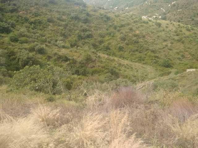 imagen 1 de Venta de tierras en Torrox (Málaga)