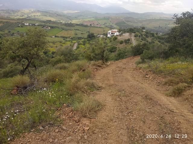 imagen 1 de Venta de finca olivar en Coín (Málaga)