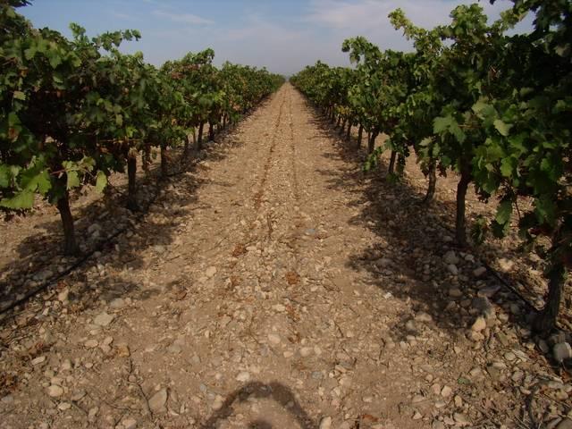 imagen 1 de Venta de viñedo