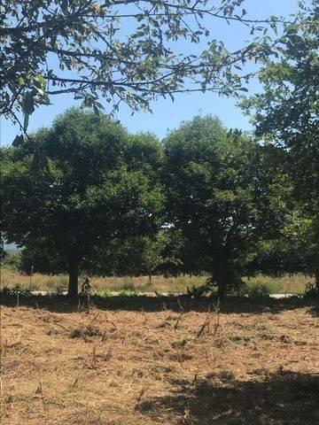imagen 1 de Vendo terreno con frutales en Mpnterrey