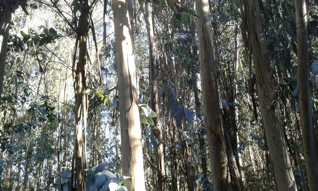 imagen 1 de Venta de terreno forestal en A graña