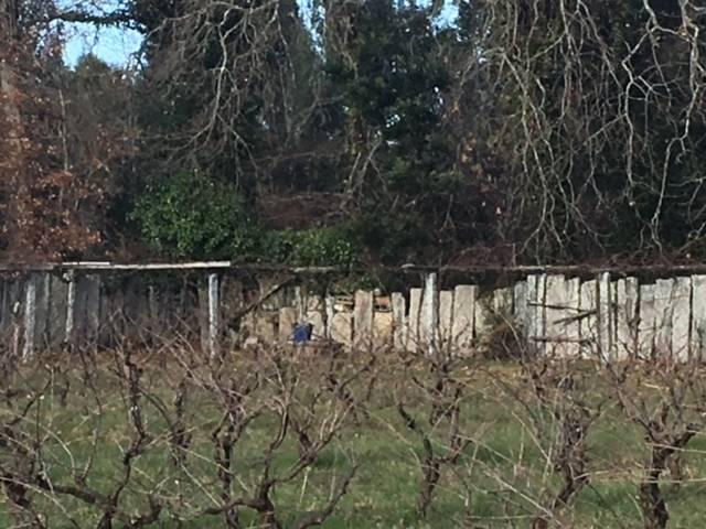 imagen 1 de Venta de terreno con viñedo en Caldas de Reis