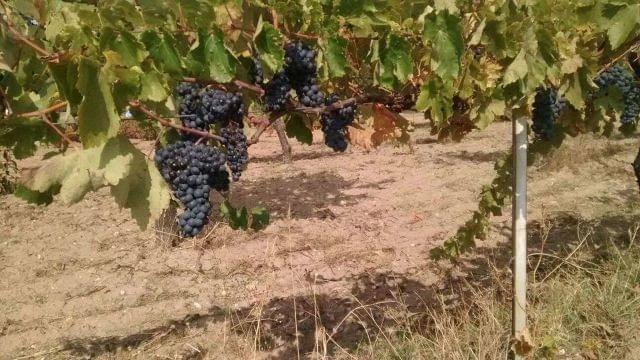 imagen 1 de Venta def inca con merendero y viñedo en Salamanca