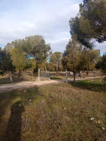 imagen 1 de Venta de finca ganadera y pinar en Cuellar (Segovia)